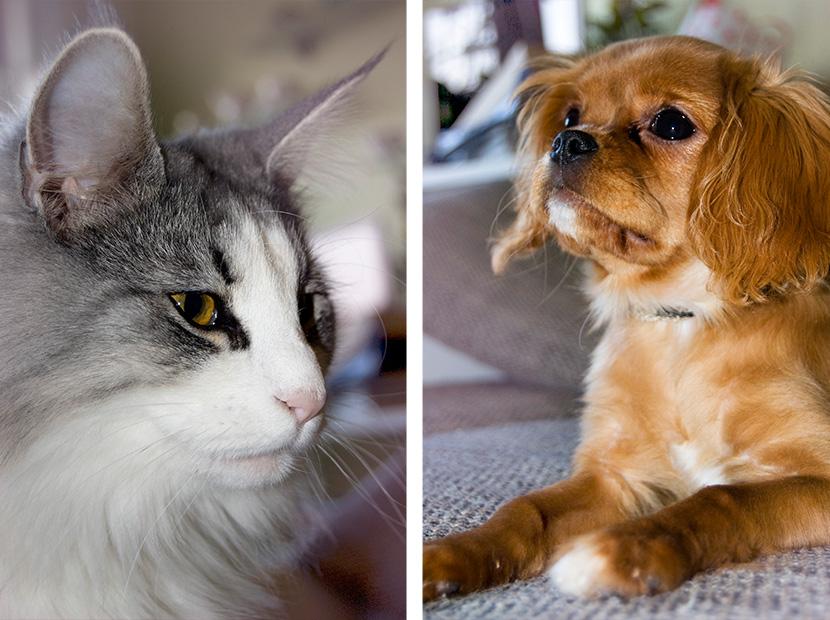 Zwei_Fotos_HundKatz