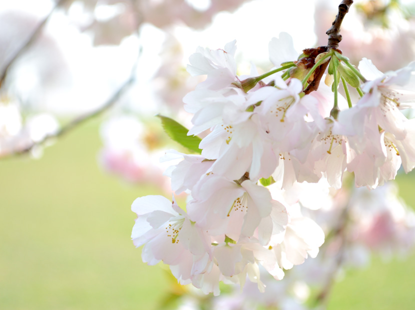 Blog_Outfit-Cherryblossom-7