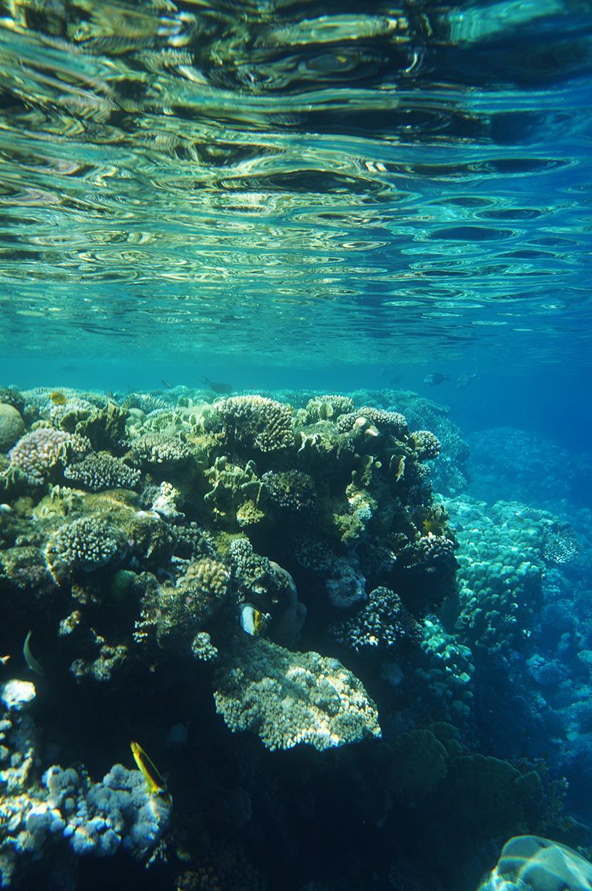 IfICouldLiveHere_Travel_Egypt_RotesMeer_RedSea_Underwater_Fotografie_Unterwasser_Fische_Riff_BelleMelange_01