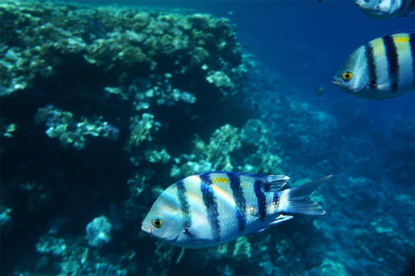 IfICouldLiveHere_Travel_Egypt_RotesMeer_RedSea_Underwater_Fotografie_Unterwasser_Fische_Riff_BelleMelange_02