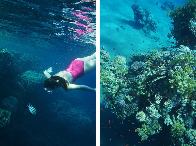 IfICouldLiveHere_Travel_Egypt_RotesMeer_RedSea_Underwater_Fotografie_Unterwasser_Fische_Riff_BelleMelange_03