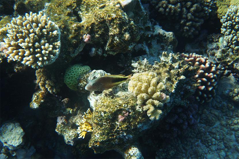 IfICouldLiveHere_Travel_Egypt_RotesMeer_RedSea_Underwater_Fotografie_Unterwasser_Fische_Riff_BelleMelange_04