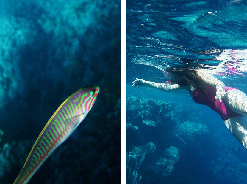 IfICouldLiveHere_Travel_Egypt_RotesMeer_RedSea_Underwater_Fotografie_Unterwasser_Fische_Riff_BelleMelange_06