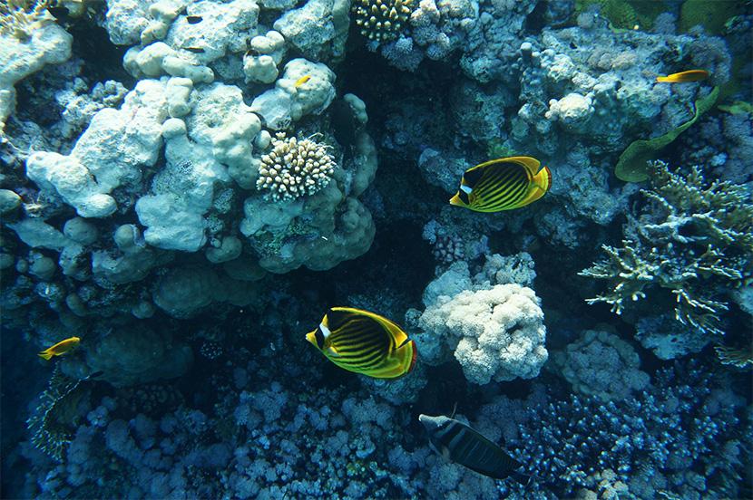 IfICouldLiveHere_Travel_Egypt_RotesMeer_RedSea_Underwater_Fotografie_Unterwasser_Fische_Riff_BelleMelange_07