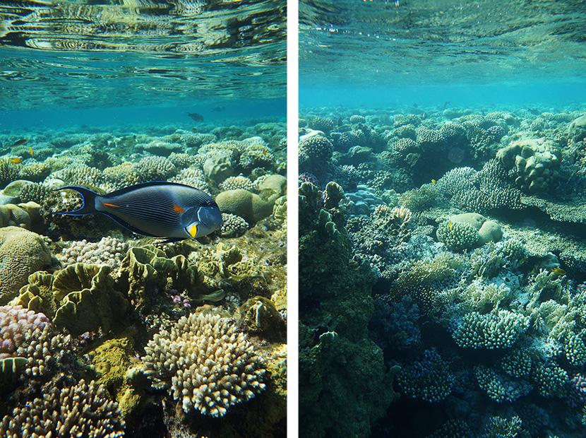 IfICouldLiveHere_Travel_Egypt_RotesMeer_RedSea_Underwater_Fotografie_Unterwasser_Fische_Riff_BelleMelange_09