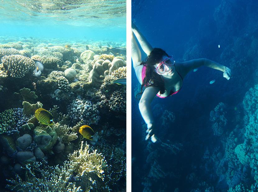 IfICouldLiveHere_Travel_Egypt_RotesMeer_RedSea_Underwater_Fotografie_Unterwasser_Fische_Riff_BelleMelange_11