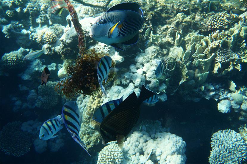IfICouldLiveHere_Travel_Egypt_RotesMeer_RedSea_Underwater_Fotografie_Unterwasser_Fische_Riff_BelleMelange_13