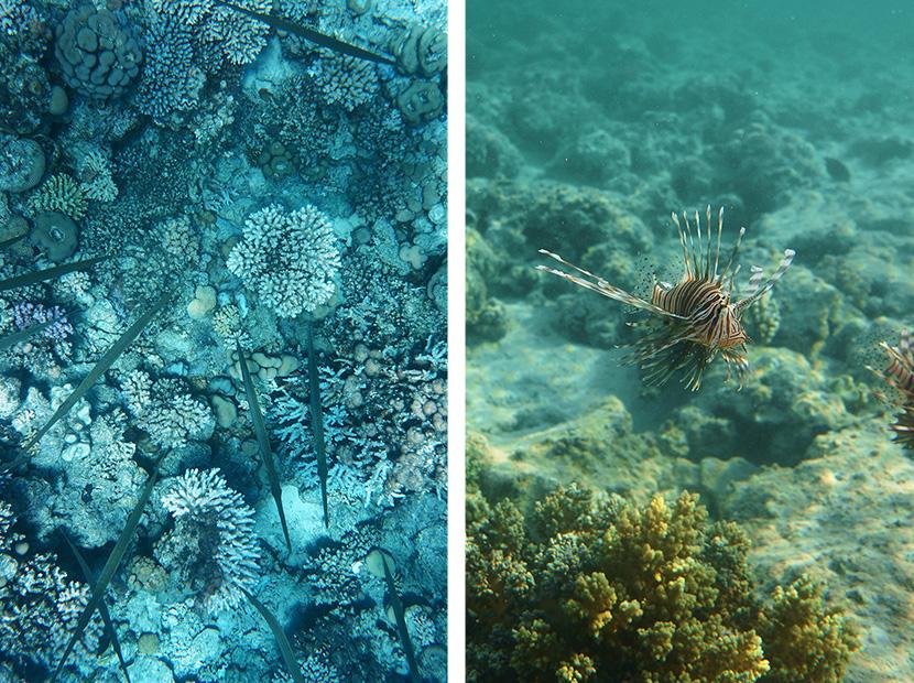 IfICouldLiveHere_Travel_Egypt_RotesMeer_RedSea_Underwater_Fotografie_Unterwasser_Fische_Riff_BelleMelange_14