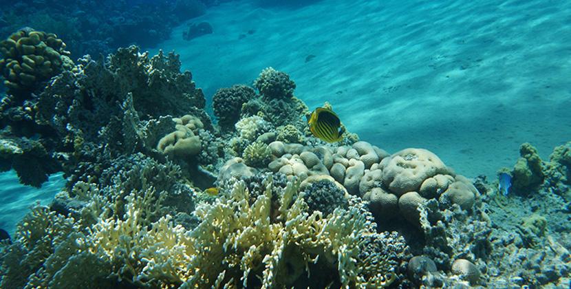 IfICouldLiveHere_Travel_Egypt_RotesMeer_RedSea_Underwater_Fotografie_Unterwasser_Fische_Riff_BelleMelange_Titelbild