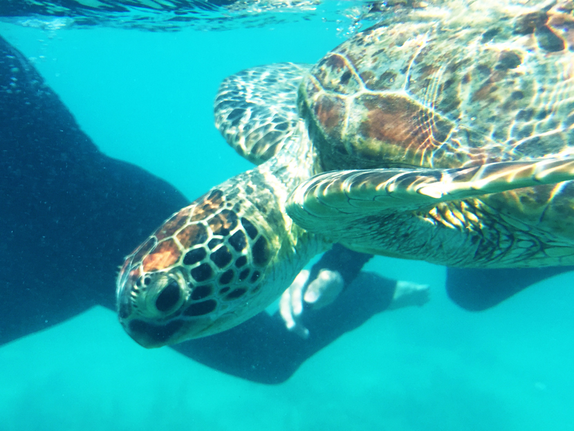Ocean-Sailing-Blizzard-Whitsunday-Islands-Snorkeling-Turtle-BelleMelange-07