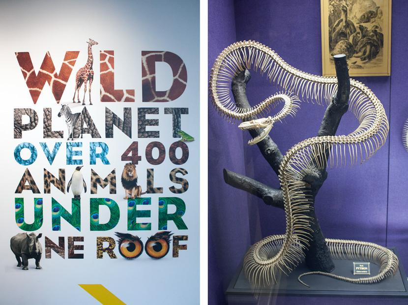 SydneyGuide-Tipps-Insider-BelleMelange-Museum-ContemporaryArt-Australian-01