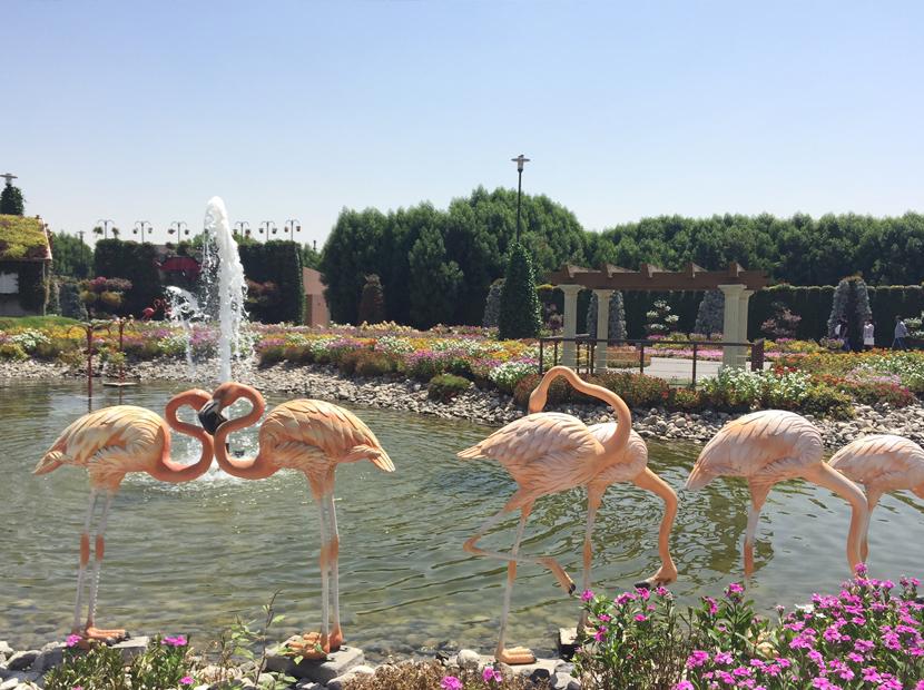 Dubai-Blumen-1