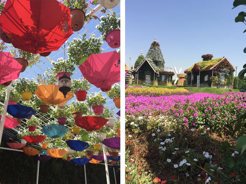 Dubai-Blumen-2
