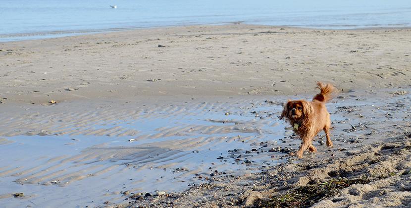 Titelbild-Cold-Breeze-Belle-Melange-Loved-Winter-at-the-sea-1
