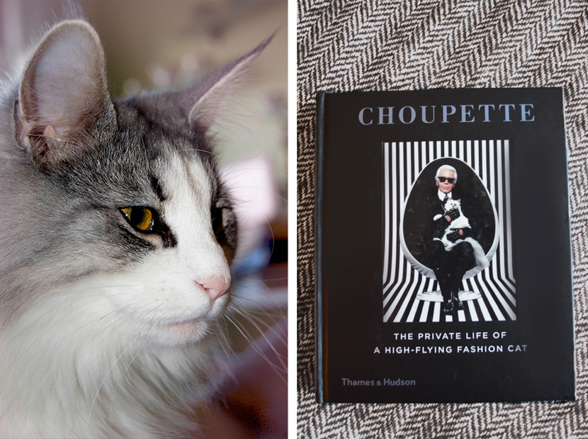Cat-Content-Karl-Lagerfeld-Choupette_Blog_Belle-Melange_Loved-7